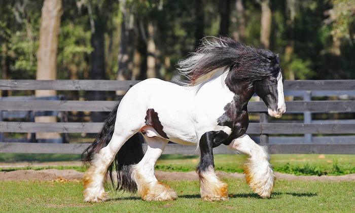 The Gypsy Gold Farm - Ocala: Horse-Farm Walking Tour for One, Two, or Four at The Gypsy Gold Farm (Up to 42% Off)
