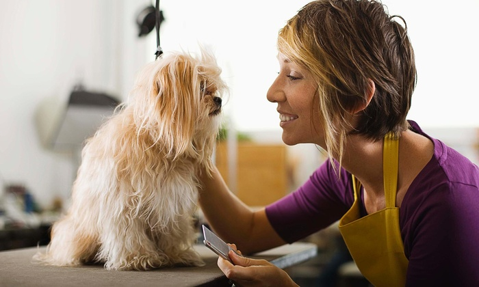 Edgy Pooch Pet Spa - Multiple Locations: Grooming Services from Edgy Pooch Pet Spa (42% Off)