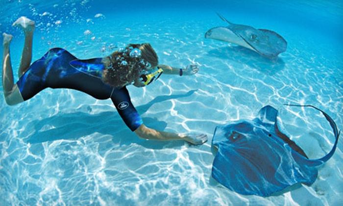 Aquarium Snorkeling Adventure Long Island Aquarium Groupon