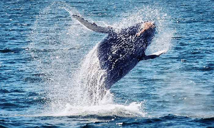 Newport Landing Whale Watching - Newport Beach: 2.5-Hour Whale-Watching Cruise for One or Two from Newport Landing Whale Watching (Up to 61%)