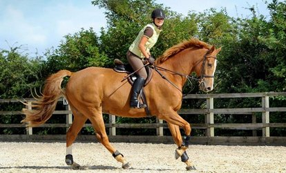 image for Horse Riding Lesson for One or Two at Mill House Riding Centre (60% Off)