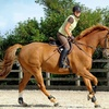 Horse Riding Lesson for 1 or 2