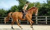 Mill House Riding Centre - Fishburn: Horse Riding Lesson for One or Two at Mill House Riding Centre (60% Off)