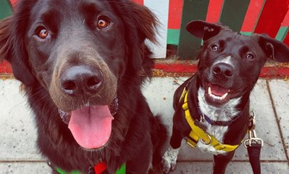 Up to 61% Off Dog Day Care at Hairy & Merry