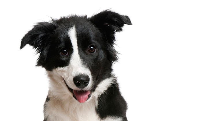 Capitola Veterinary Hospital - Capitola: $39 for a New-Pet Exam with One Vaccine at Capitola Veterinary Hospital (Up to $88 Value)