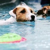 Up to 58% Off Dog Care