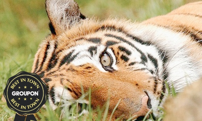 Paradise Wildlife Park - Broxbourne: One-Night Stay at 4* Marriott, Breakfast With The Big Cats and Broxbourne Wildlife Park Entry from £149 (Up to 62% Off)
