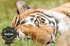 Broxbourne Paradise Wildlife Park - Broxbourne: One-Night Stay at 4* Marriott, Breakfast With The Big Cats and Broxbourne Wildlife Park Entry from £149 (Up to 62% Off)