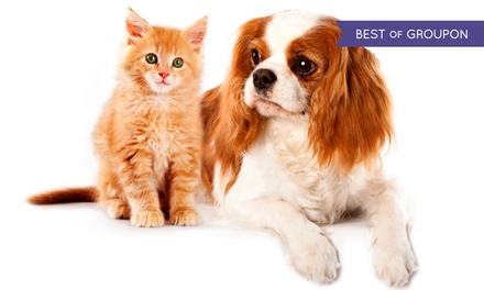 Dog or Cat Boarding or $30 Worth of Pet Supplies at Miss Kitty's Bed & Bath (Up to 64% Off)