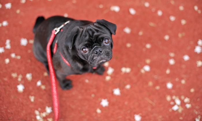 Xoxo Pet Sittings - San Antonio: Three Days of Pet Sitting Services from XoXo Pet Sittings (48% Off)