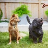 Up to 55% Off at Dog Country Daycare