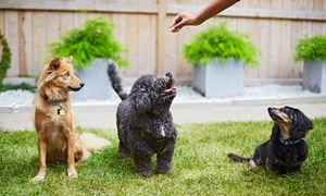The Filthy Animal: Grooming Package for a Small, Medium, or Large Dog at The Filthy Animal (Up to 51% Off)
