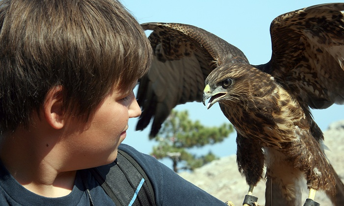 Fens Falconry - Wisbech Saint Mary: Falconry Experience With Lunch For One (£20) or Two (£39) at Fens Falconry (Up to 57% Off)