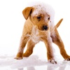Up to 52% Off Dog Grooming at Central Park Dog Daycare