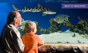 Austin Aquarium: Visit for 1 Adult, 1 Adult & Child, or 2 Adults & 2 Children or Birthday Party at Austin Aquarium (Up to 50% Off)