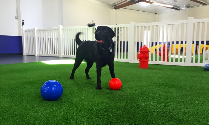 The Hounds Club - Glendale: Dog Daycare, Boarding, or Grooming at The Hounds Club (Up to 57% Off)