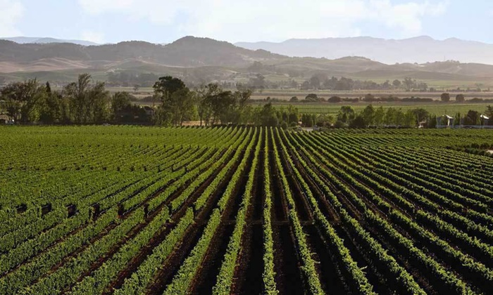 California Wine Tour - Healdsburg: Three- or Five-Night Self-Guided Wine Tour Valid Sunday Through Thursday from Authentic Wine Country in Napa and Sonoma, CA