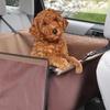 Pet Store Backseat Dog Carrier