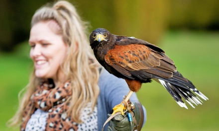 Predator Power Falconry Experiences