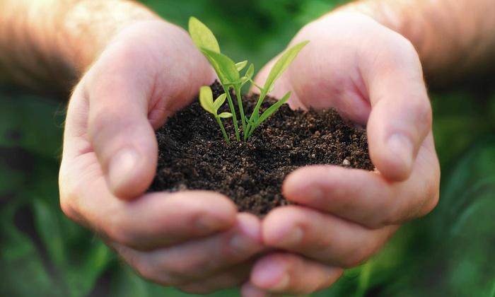 Caribean Lawn Maintenance - Charlotte: $18 for $40 Worth of Lawn and Garden Care — Caribean Lawn Maintenance