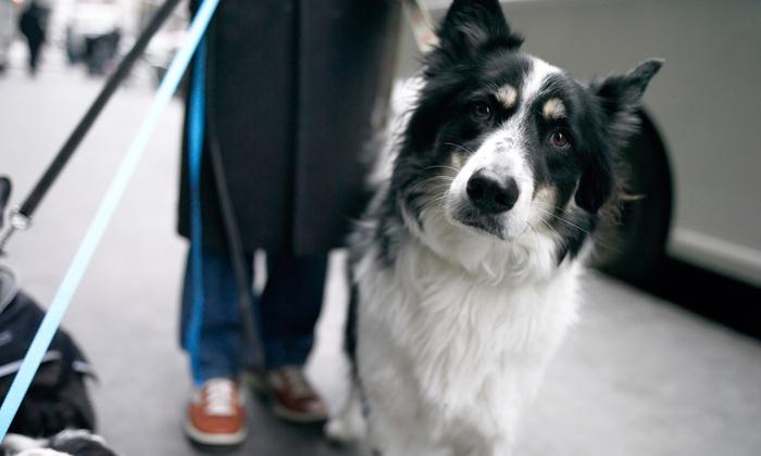 Clifton Bark Dog House - Halfmoon: $14 for $25 Worth of Pet Daycare — Clifton Bark Dog House