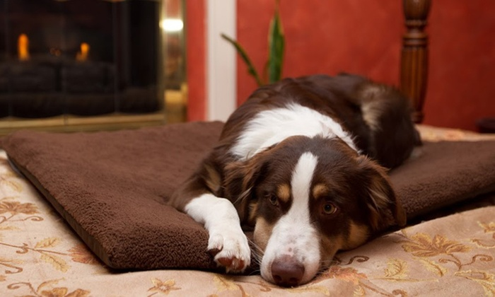 NAP Orthopedic Pet Mats: NAP Orthopedic Pet Mats (Up to 49% Off). Multiple Sizes and Colors Available. Free Shipping and Returns.