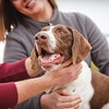 Up to 84% Off Adoption at Arizona Humane Society
