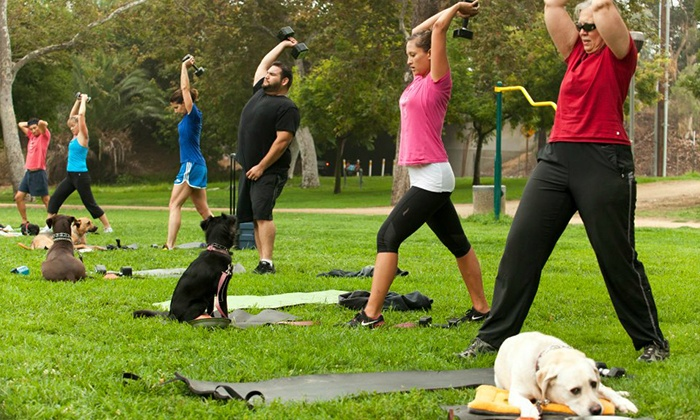 ThankDog! Bootcamp - Multiple Locations: Three or Six Fitness and Dog-Obedience Boot-Camp Classes with Initial Consultation at ThankDog! Bootcamp (Up to 58% Off)