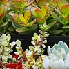 Half Off Plants and Garden Accents