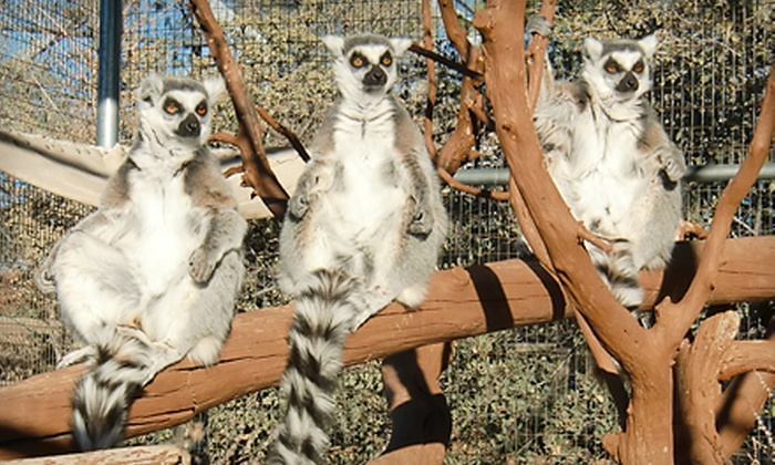 Heritage Park Zoological Sanctuary - Prescott: Visit to Heritage Park Zoological Sanctuary (Up to 56% Off). Three Options Available.