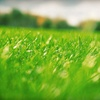 Up to 52% Off Lawn Fertilization or Aeration