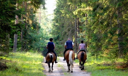 $25 for $45 Worth of Horseback Riding Lessons at Innovation Arabians