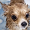 53% Off Grooming Services