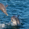 Up to 55% Off Dolphin Cruise