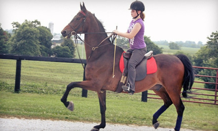 Shamrock Farms - Smithfield: Two or Four Horseback-Riding Lessons at Shamrock Farms (Up to 54% Off)