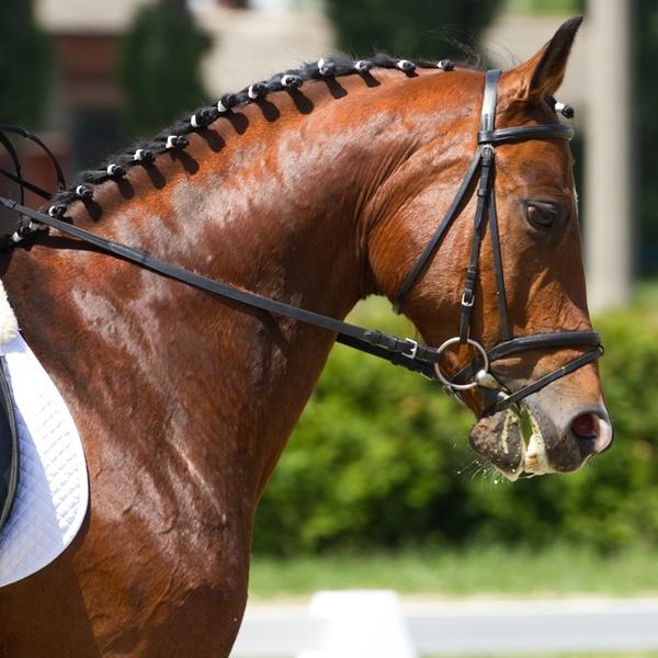 c3c743d807 3 o 6 lezioni di equitazione -78% - CIRCOLO IPPICO SPIA D'ITALIA | Groupon