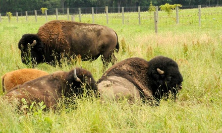 Bison-Ranch Tour for Two, Four,  Six, or Eight at Cook's Bison Ranch (Up to Half Off)