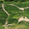 Up to 38% Off a Corn-Maze Visit
