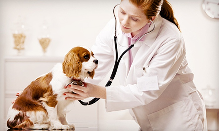 Bustillo Animal Hospital - Kendall: $115.00 for $255.00 Worth of Veterinary Services