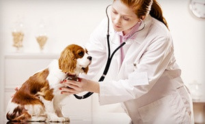 Bustillo Animal Hospital: $115.00 for $255.00 Worth of Veterinary Services