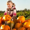 50% Off Autumn Farm Activities