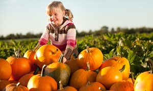 McClelland's Dairy: Autumn Farm Activities for a Family of Two or Four or Pumpkin Picking at McClelland's Dairy (50% Off)