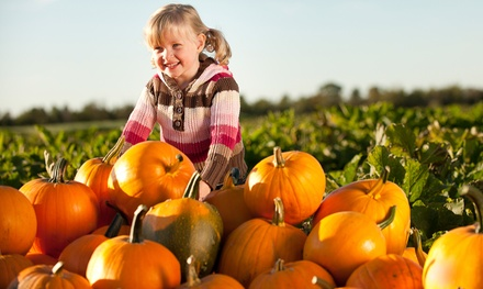 $12 for Halloween Festival with Pumpkins for Two Children at Woodside Nursery Inc. ($20 Value)