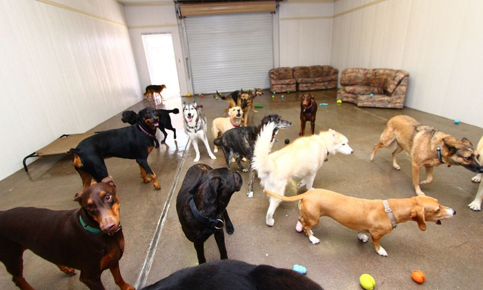 Arizona Canine Center - Chandler: $14 for $26 Worth of Pet Daycare — Arizona Canine Center