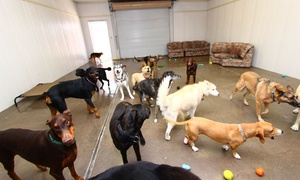 Arizona Canine Center: $14 for $26 Worth of Pet Daycare — Arizona Canine Center