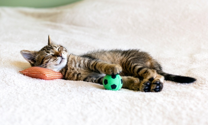 Love Your Pet - Kemptville: Pet Toys and Accessories at Love Your Pet (50% Off). Two Options Available.