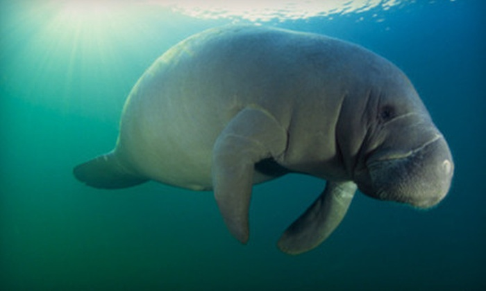 American Pro Diving Center - Royal Highlands: $29 for a Guided Manatee Snorkel Tour from American Pro Diving Center ($59.50 Value)