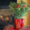 Deluxe Holiday Holly Bush