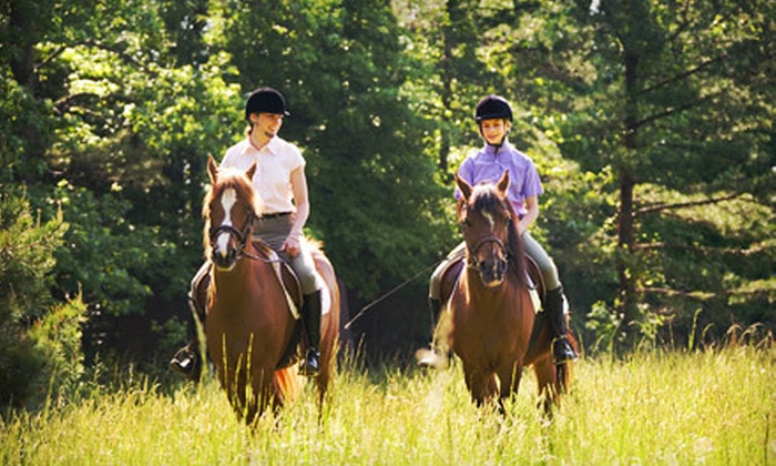 Dunham Sport Horses - Napoli: Riding Lesson or Scenic Trail Ride for Two from Dunham Sport Horses in Little Valley (51% Off)