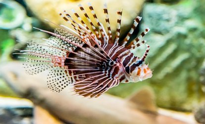 Sharjah Aquarium and 15 Other Museum Visit For One or Two from AED 69 with Sharjah Museums Department (Up to 46% Off)